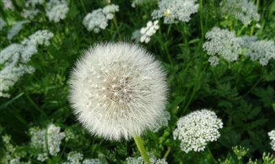 Blumen für Ute   story.one