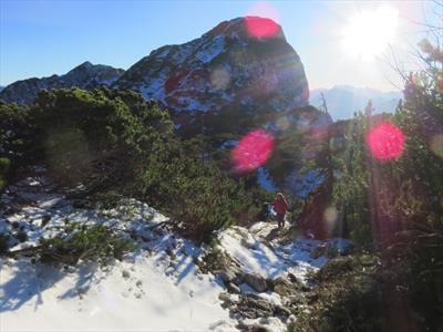 Glühwürmchen, mitten im Winter! | story.one