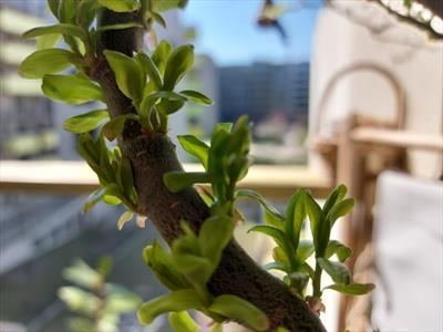 Mein Garten, mein Paradies | story.one