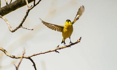Ein Vogel fliegt aus, das Fliegen zu lernen | story.one
