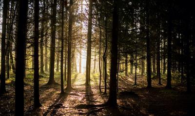 Herbstliebe | story.one
