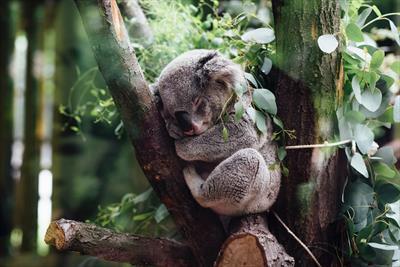Jacky aus Australien | story.one