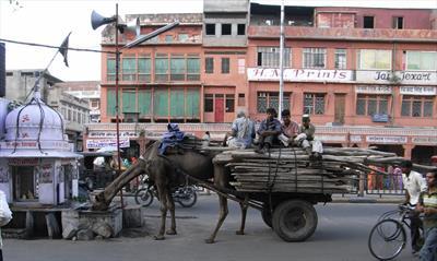 Indien - prächtige Kontraste in Rajasthan | story.one