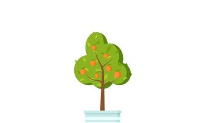 Der kleine Orangenbaum | story.one