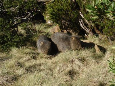 Auf du und du mit Wombat, Wallaby und Co.   story.one