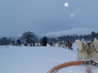 Mit dem Hundeschlitten durch Norwegen   story.one