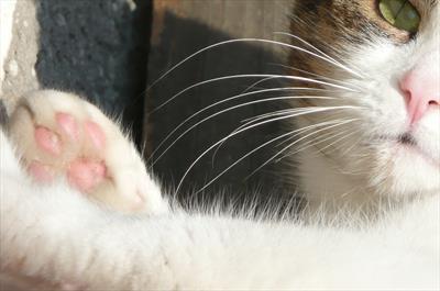 Crouching cat lingo | story.one