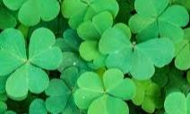 Ein vergessener irischer Pflichttermin | story.one