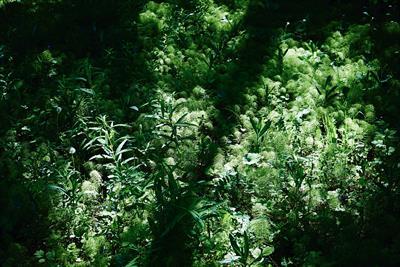 Mein Garten ist dein Garten | story.one
