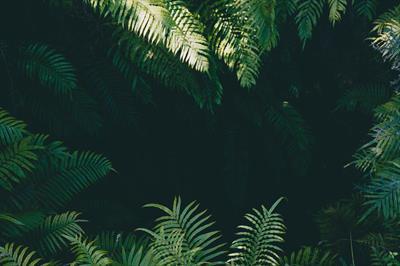 Dschungel im Kopf 🌿- Gedanken | story.one