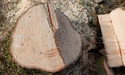 Wieder ein Baum weniger | story.one
