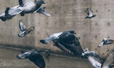 Fliegende Wörter | story.one