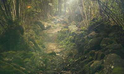 In den Wäldern meines Lebens | story.one