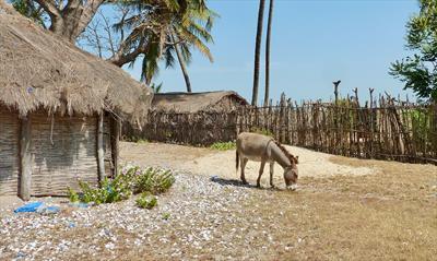 Donkey Alina   story.one
