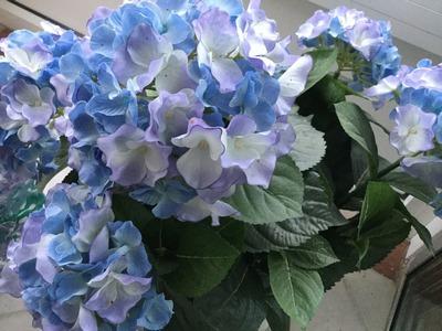 Blaue Hortensien | story.one