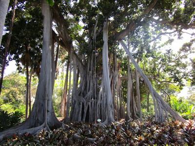 Bäume - meine große Freude | story.one