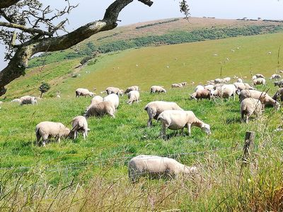 sheep story | story.one
