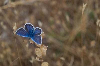 Der blaue Schmetterling | story.one