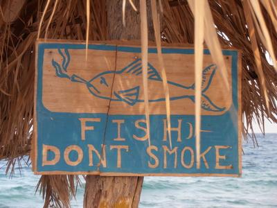 Einfach Sein oder fish don´t smoke | story.one