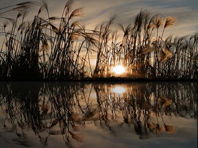 Spiegel des Wassers   story.one