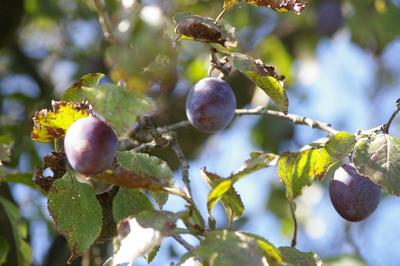 Vom Obstverkäufer zum Zeitungsmacher | story.one