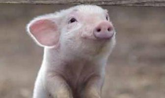 Armes Schweindl | story.one