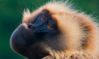 Meditation - von den kreischenden Affen | story.one
