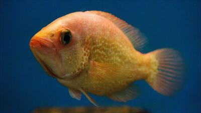Der kleine Honigfisch in Quarantäne | story.one