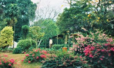 Der Botanische Garten bei Kandy | story.one