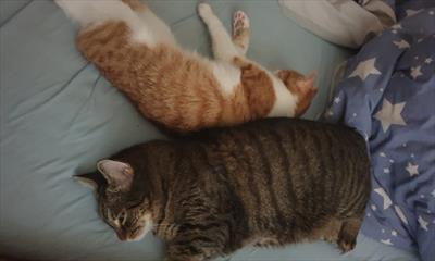 Katzen und ihre Fähigkeiten | story.one