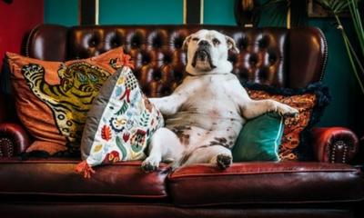 Nina und die Couch | story.one
