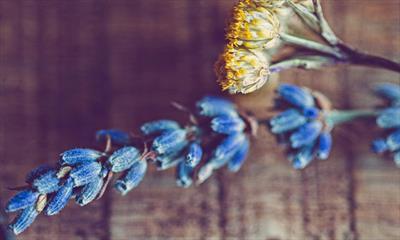 Lavendelduft | story.one