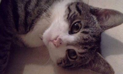 Katze müsste man sein | story.one