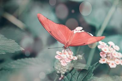 Der Schmetterlingstanz | story.one