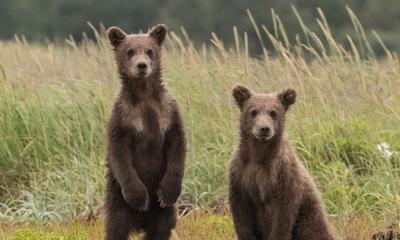 Bea und der Bär | story.one