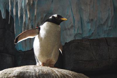 Der kleine Pinguin im Regenwald | story.one