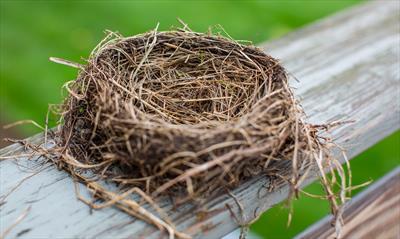 Aus dem Nest geworfen ( 54 ) | story.one
