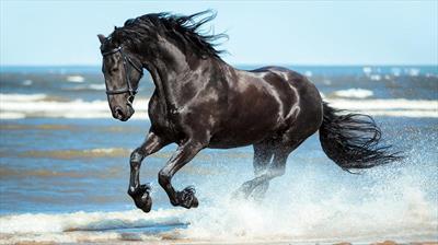 Das Glück liegt auf dem Rücken der Pferde   story.one