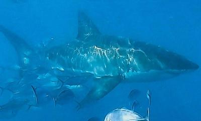 Die Great Ocean Road und der weiße Hai | story.one