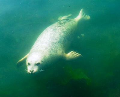 Swimming like a seal   story.one