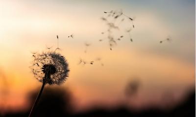 Schmetterlingseffekt der Freundlichkeit   story.one