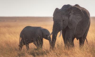 Tausche Baby-Elefant gegen Känguru | story.one