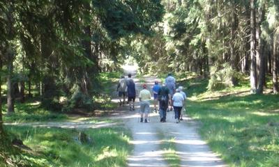Gehen wir in den Wald! | story.one