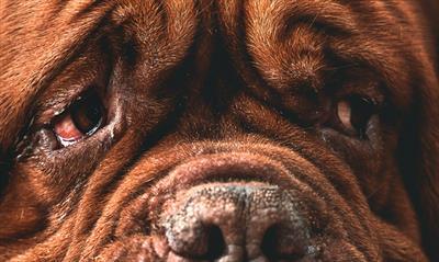 Alter Hund | story.one