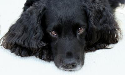 Henry, der Heimhund   story.one
