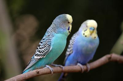 Der Vogel | story.one