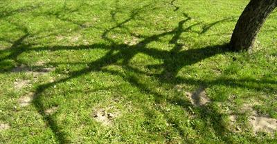 Von verschwundenen Bäumen | story.one