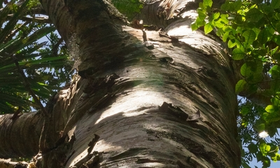 Bäume umarmen - muß das sein? | story.one