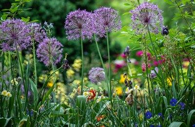 Gartenlast | story.one