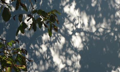 Nächtliche Zeitreise im Garten | story.one